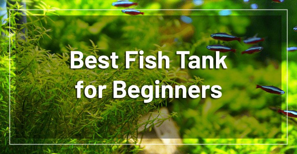 best-beginner-fish-tank
