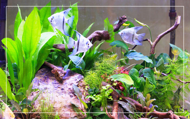 Beginner S Guide To Set Up A Freshwater Aquarium