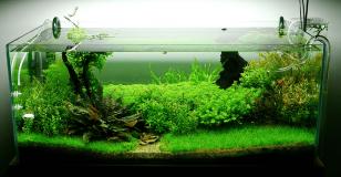 freshwater-fish-tank-setup