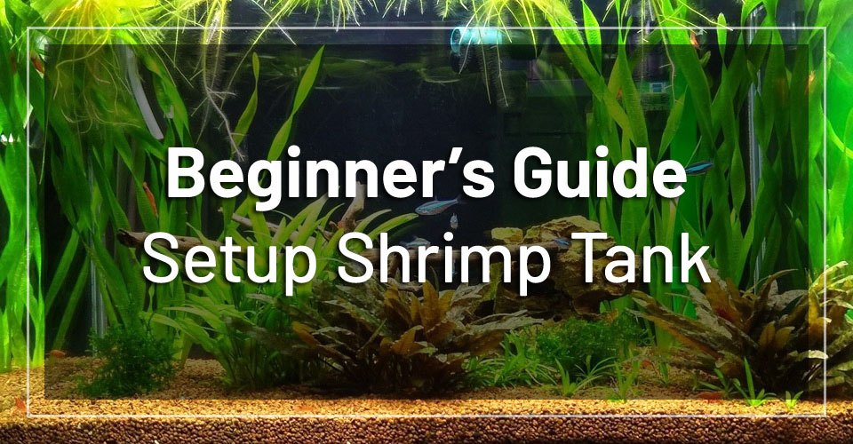 how to setup a freshwater shrimp tank beginner s guide