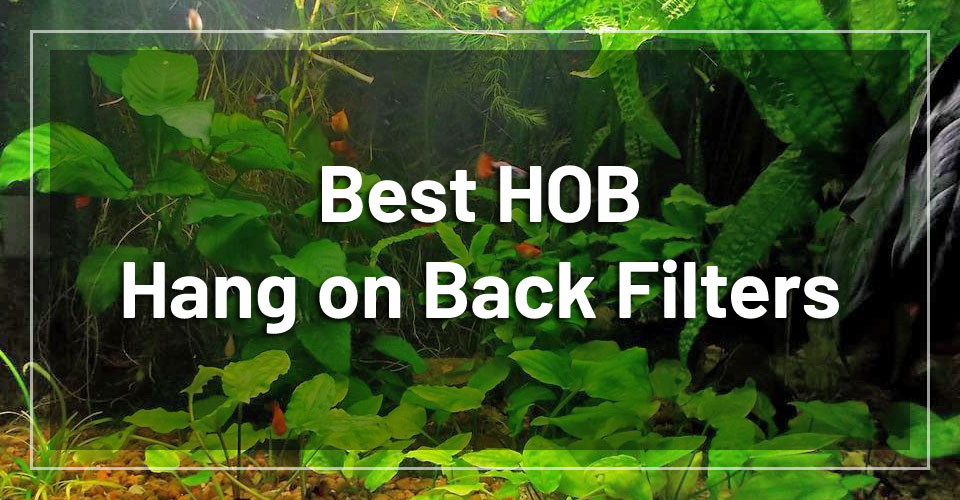 best-hang-on-back-hob-filters