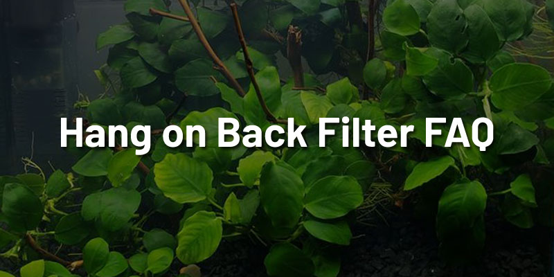 hang-on-back-filter-faq