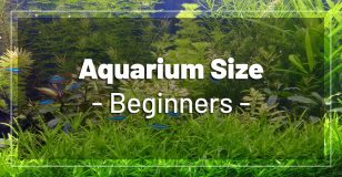 best-aquarium-size-beginners