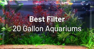 best-filters-20-gallon-aquariums