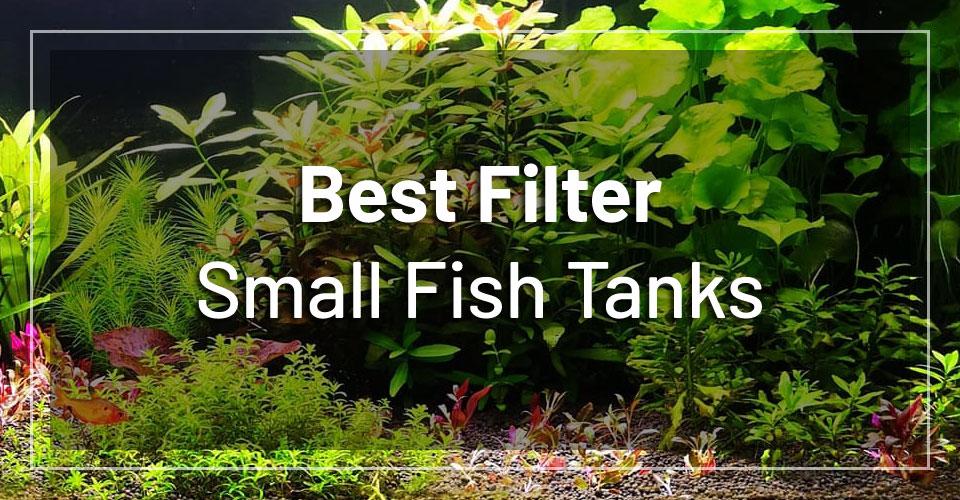 best-filters-small-fish-tanks