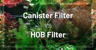 canister-filter-vs-hob-filter