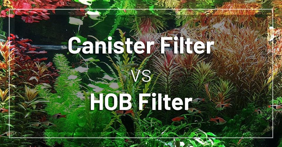 canister-filter-vs-hob-filter