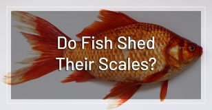 fish-shed-scales