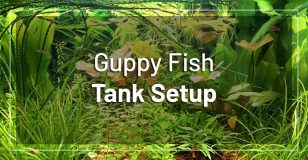 guppy-fish-tank-setup