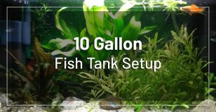 10-gallon-fish-tank-setup