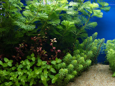 Live Plants for 5 Gallon Aquarium