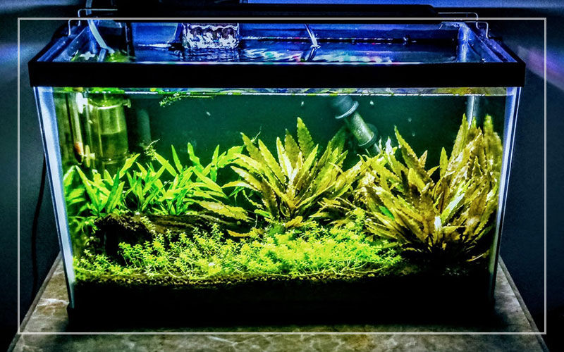 5 Best 20 Gallon Fish Tank Kits For Beginners Updated 2020