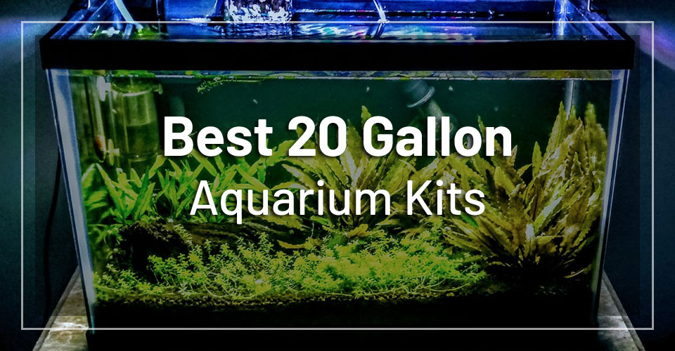 best-20-gallon-aquarium-kits