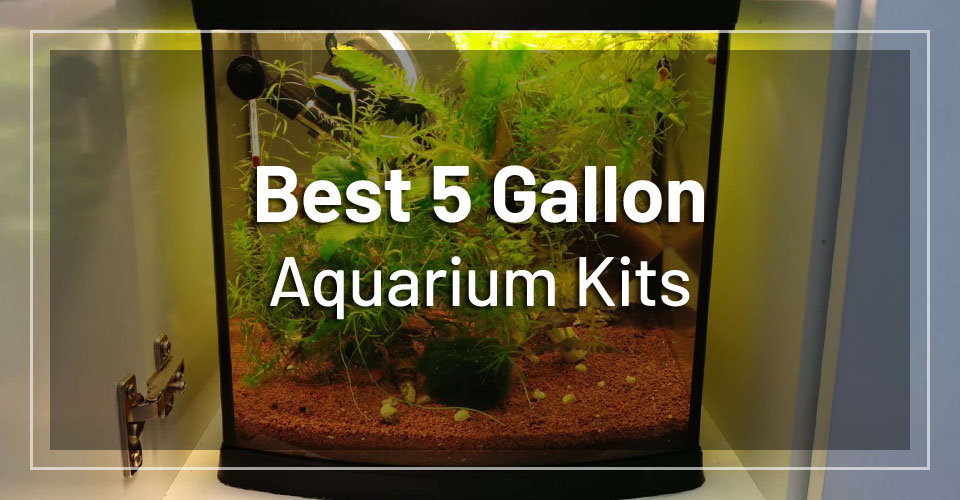 best-5-gallon-aquarium-kits