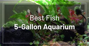 best-fish-5-gallon-aquarium