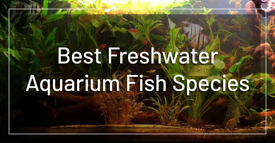 best-freshwater-aquarium-fish