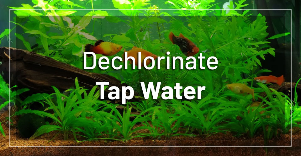 dechlorinate-tap-water-without-chemicals