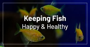 keeping-fish-happy-healthy