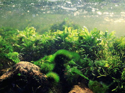 Add Live Plants to Your Tank