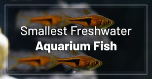 smallest-freshwater-aquarium-fish-nano-tanks