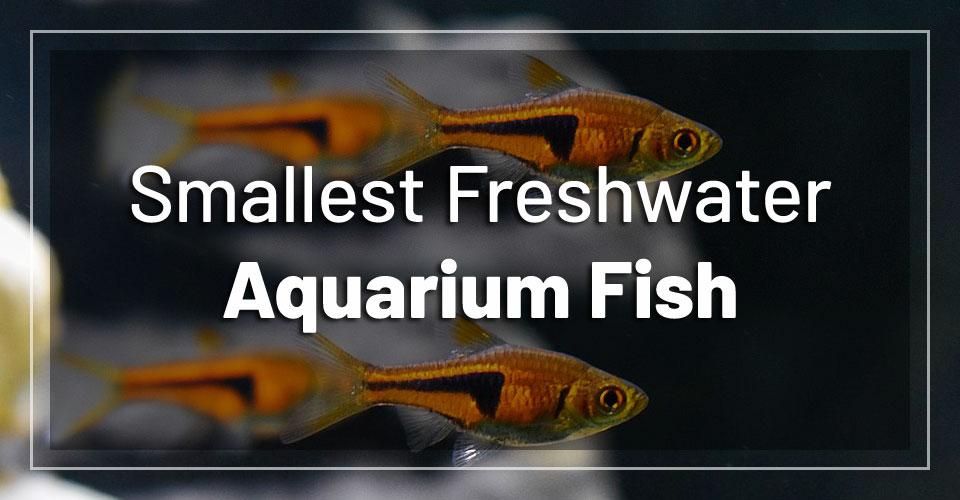 smallest-freshwater-aquarium-fish-nano-tanks