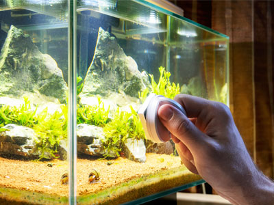 How to Maintain a Betta Fish Tank?