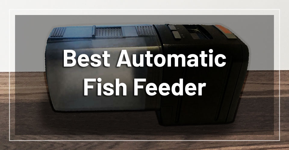 best-automatic-fish-feeder