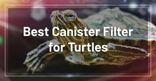 best-canister-filter-turtles