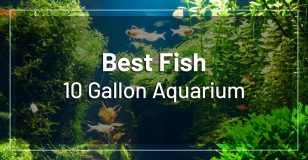 best-fish-10-gallon-aquarium