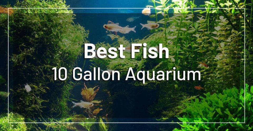 best-fish-10-gallon-aquarium