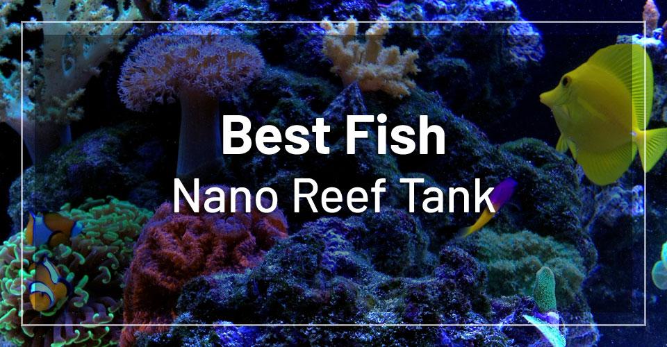 best-fish-nano-reef-tank