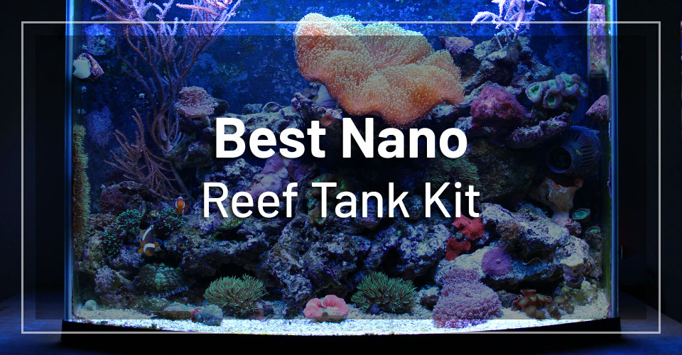 best-nano-reef-tank-kit
