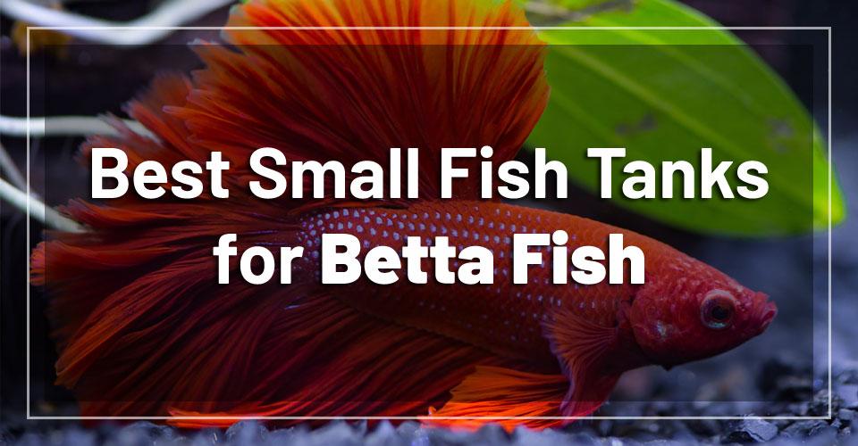 best-small-fish-tanks-betta-fish