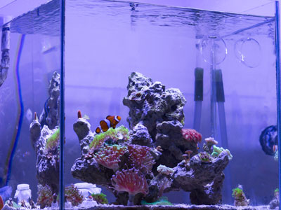 Choosing a Nano Reef Tank Kit
