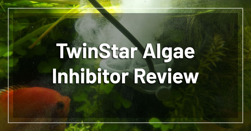 twinstar-algae-inhibitor-review