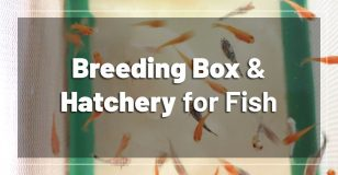 best-breeding-box-hatchery