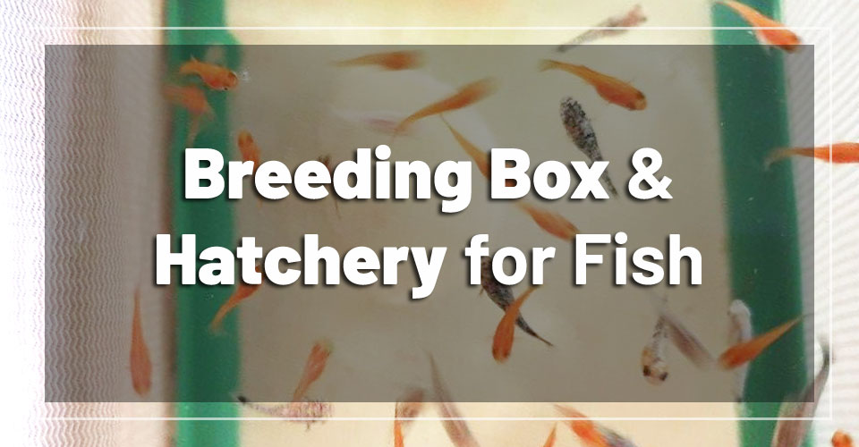best-breeding-box-hatchery