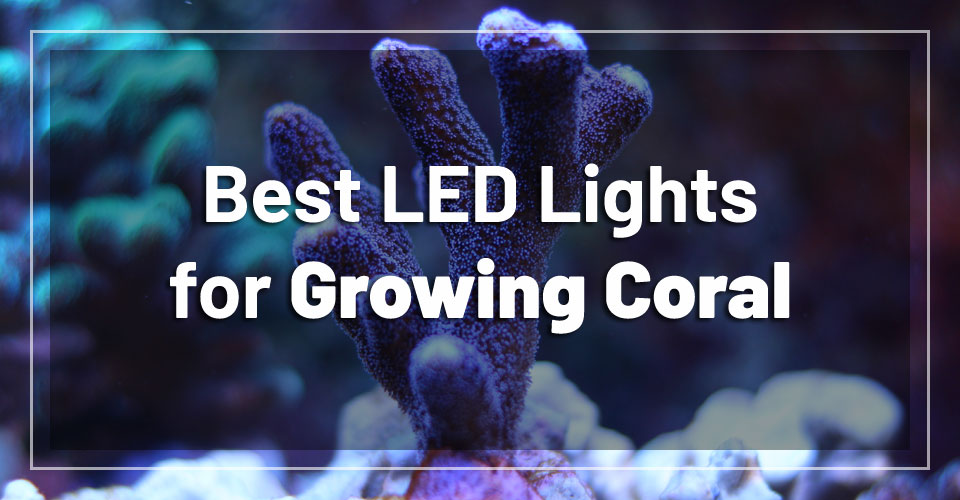 best-led-lights-growing-coral