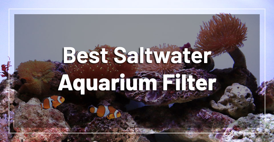 best-saltwater-aquarium-filter