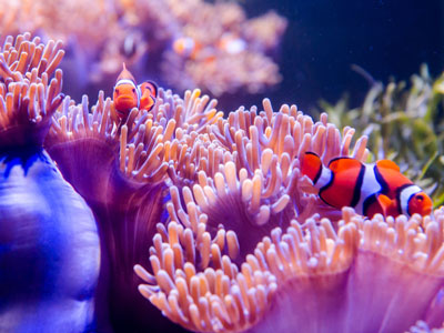 How to Choose LED Lights for Marine Aquarium?