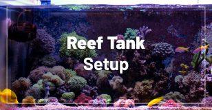 reef-tank-setup