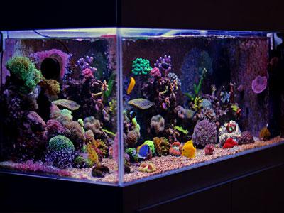 Choosing Saltwater Aquarium Size